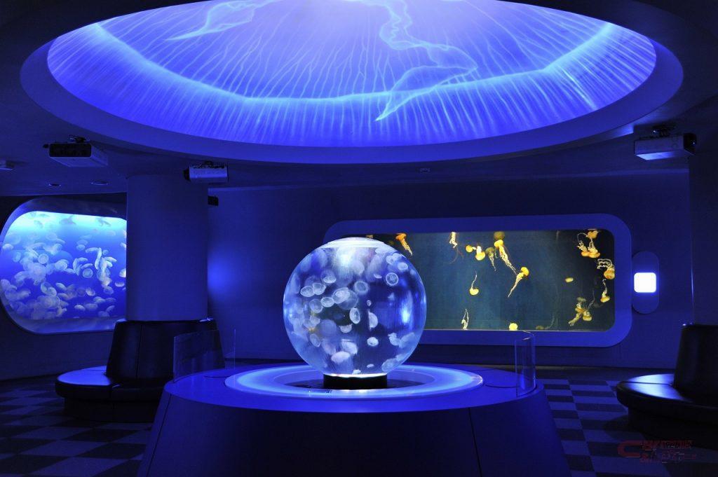 新江の島水族館のクラゲ展示