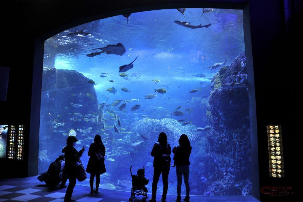 新江の島水族館の相模湾大水槽