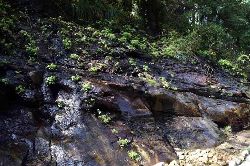 湧水が滴る崖
