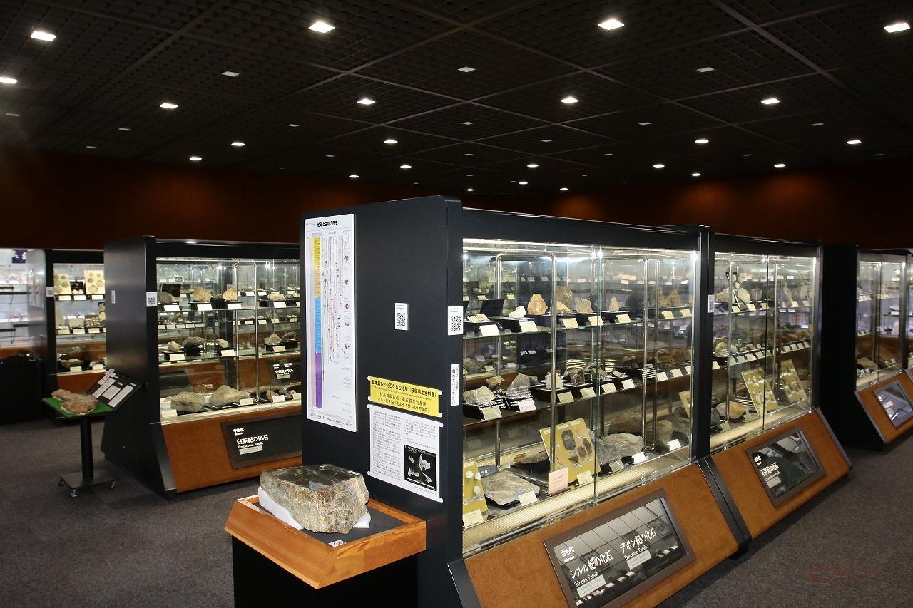 2000点の岩石・鉱物・化石展示は圧巻の一言