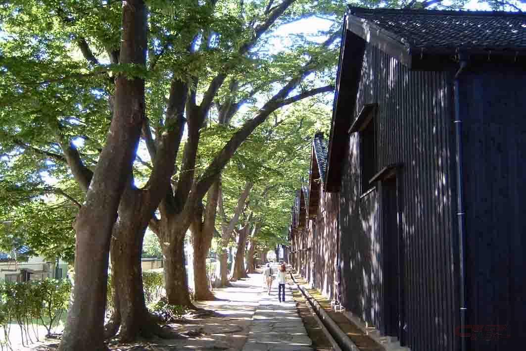 青く茂るケヤキの葉が倉庫を守る