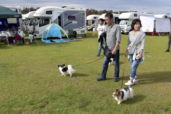 ペットを散歩させるキャンプ大会参加者イメージ